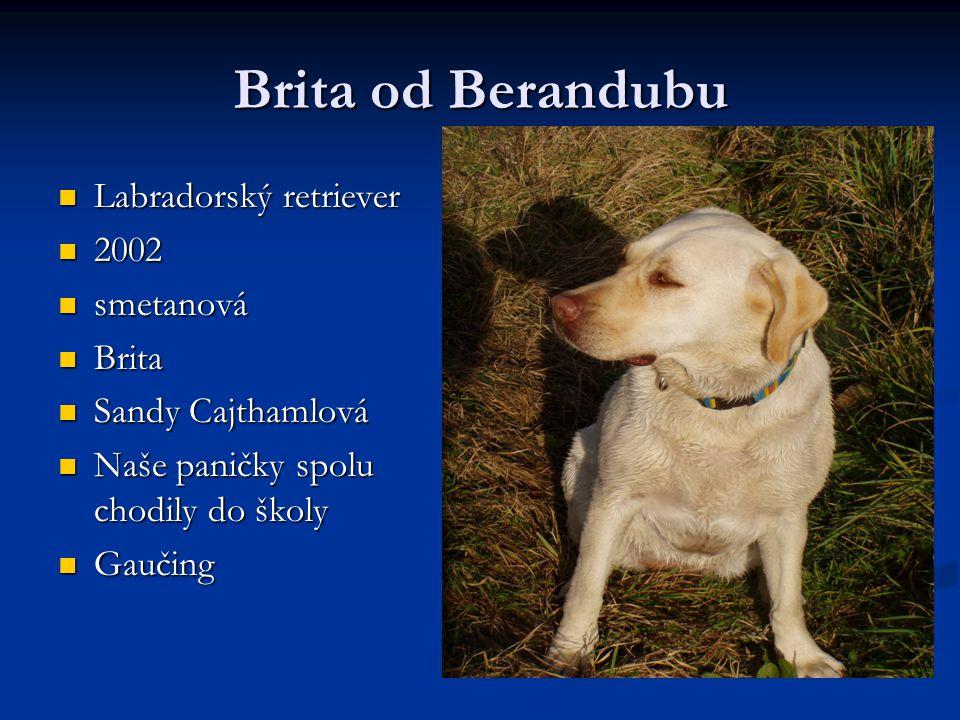 Brita od Berandubu Labradorský retriever 2002 smetanová Brita