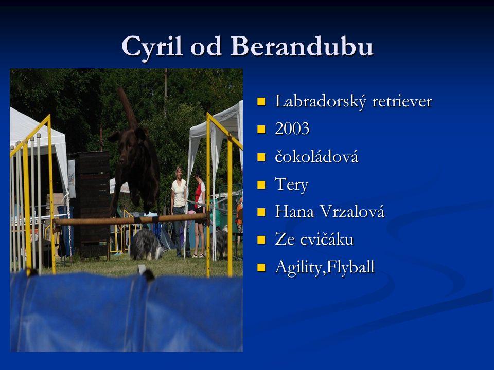 Cyril od Berandubu Labradorský retriever 2003 čokoládová Tery