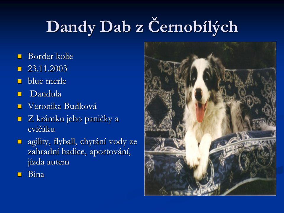 Dandy Dab z Černobílých