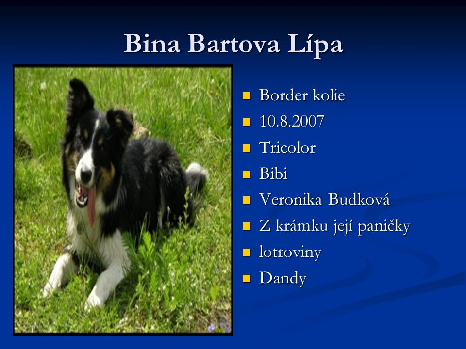 Bina Bartova Lípa Border kolie 10.8.2007 Tricolor Bibi