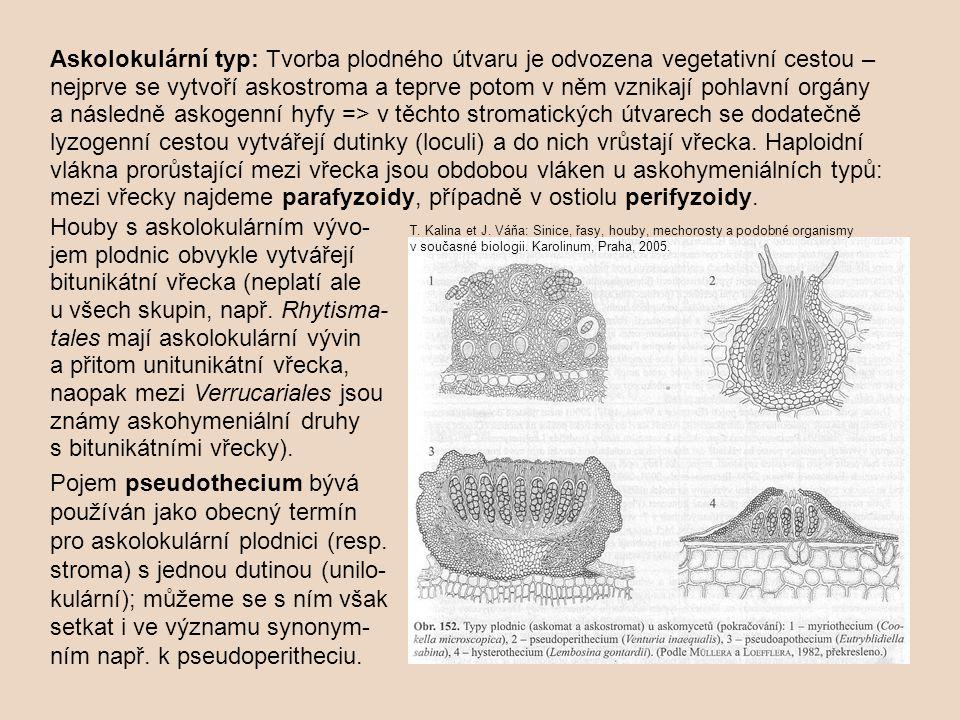 Askolokulární typ: Tvorba plodného útvaru je odvozena vegetativní cestou – nejprve se vytvoří askostroma a teprve potom v něm vznikají pohlavní orgány a následně askogenní hyfy => v těchto stromatických útvarech se dodatečně lyzogenní cestou vytvářejí dutinky (loculi) a do nich vrůstají vřecka. Haploidní vlákna prorůstající mezi vřecka jsou obdobou vláken u askohymeniálních typů: mezi vřecky najdeme parafyzoidy, případně v ostiolu perifyzoidy.