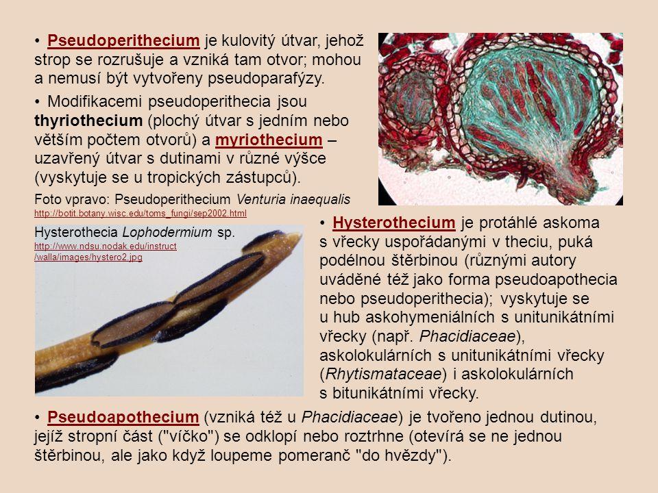 • Pseudoperithecium je kulovitý útvar, jehož strop se rozrušuje a vzniká tam otvor; mohou a nemusí být vytvořeny pseudoparafýzy.