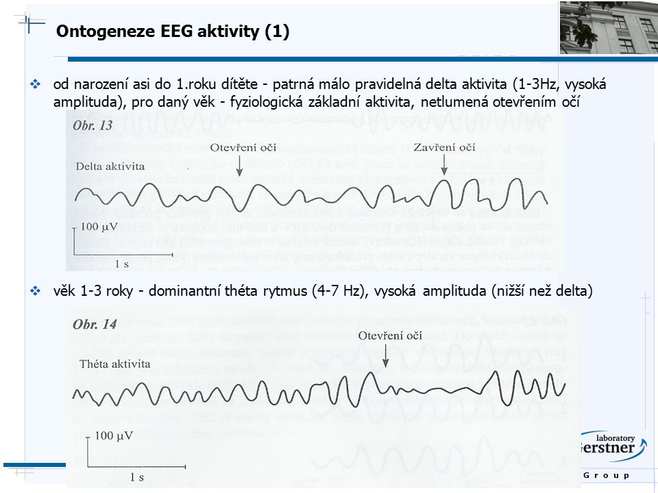 Ontogeneze EEG aktivity (1)
