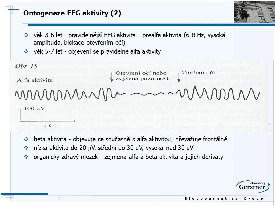 Ontogeneze EEG aktivity (2)