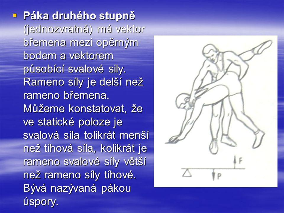 Páka druhého stupně (jednozvratná) má vektor břemena mezi opěrným bodem a vektorem působící svalové sily.