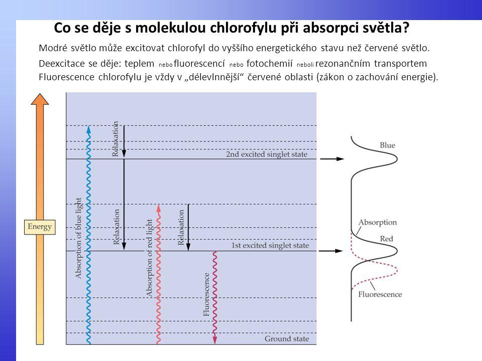 Co se děje s molekulou chlorofylu při absorpci světla