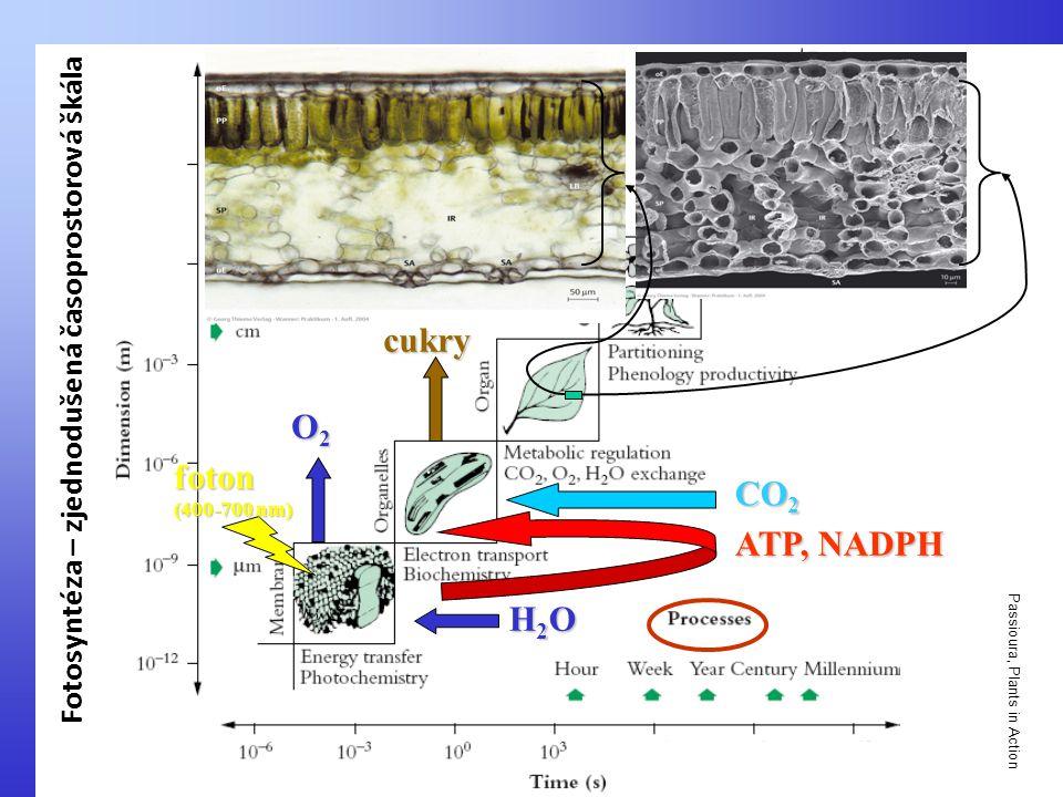 cukry O2 foton CO2 ATP, NADPH H2O