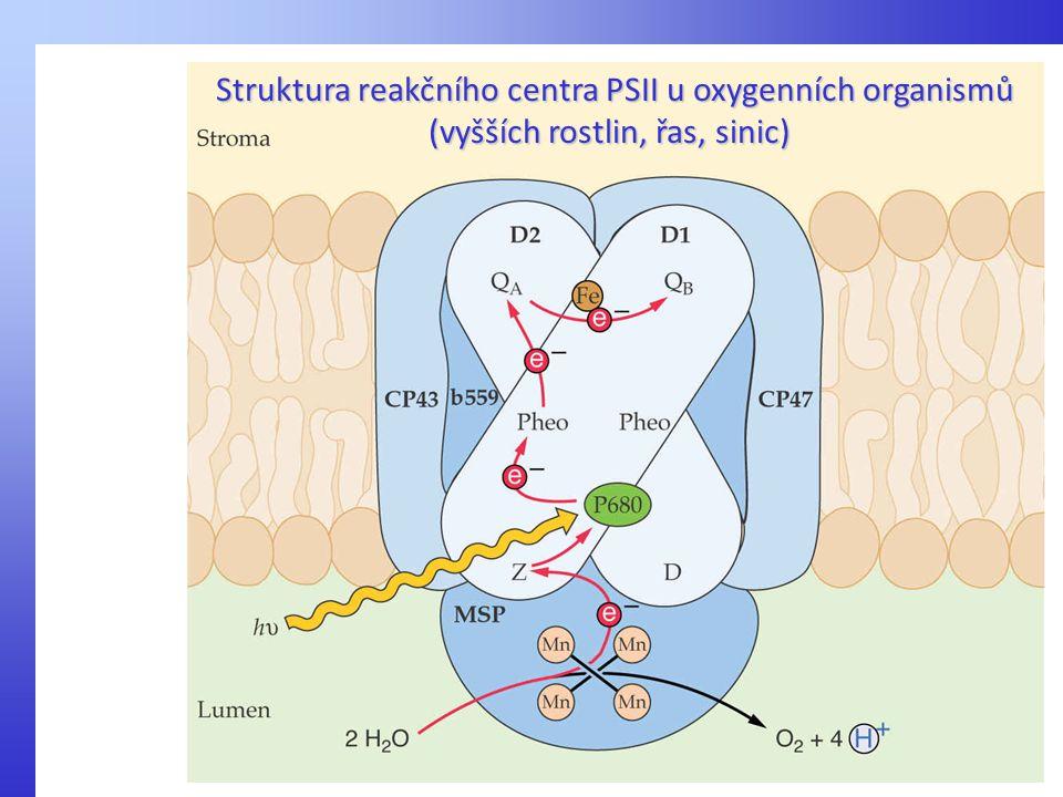 Struktura reakčního centra PSII u oxygenních organismů