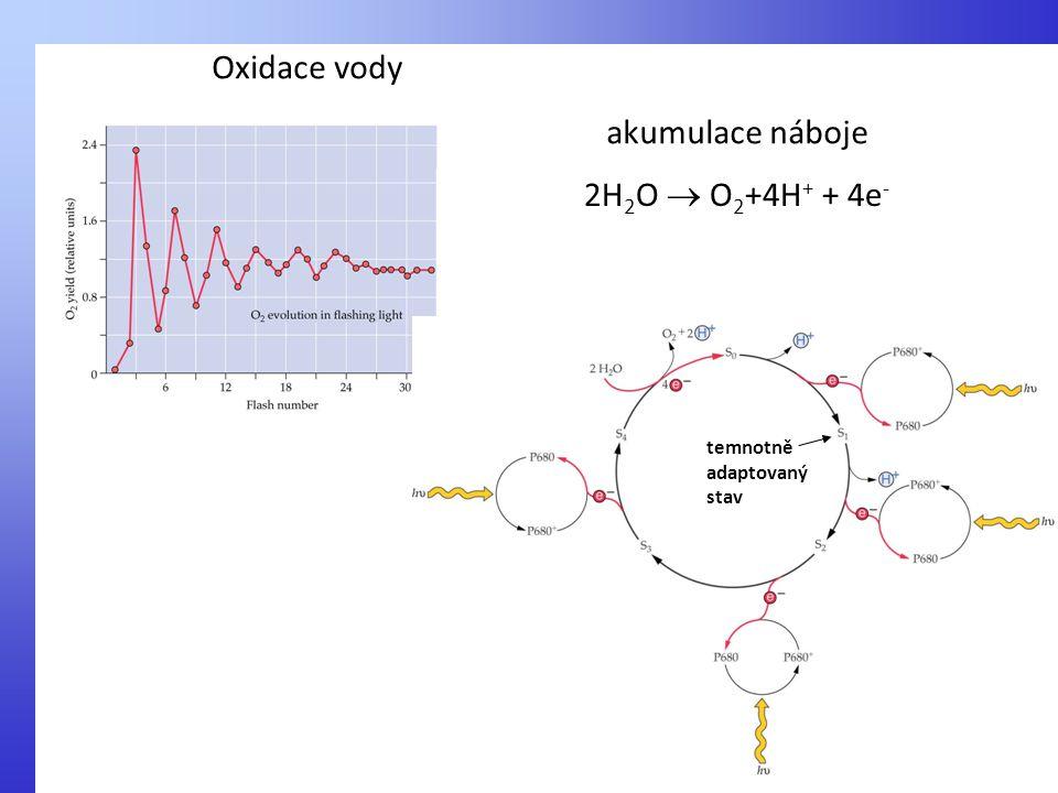 Oxidace vody akumulace náboje 2H2O  O2+4H+ + 4e-