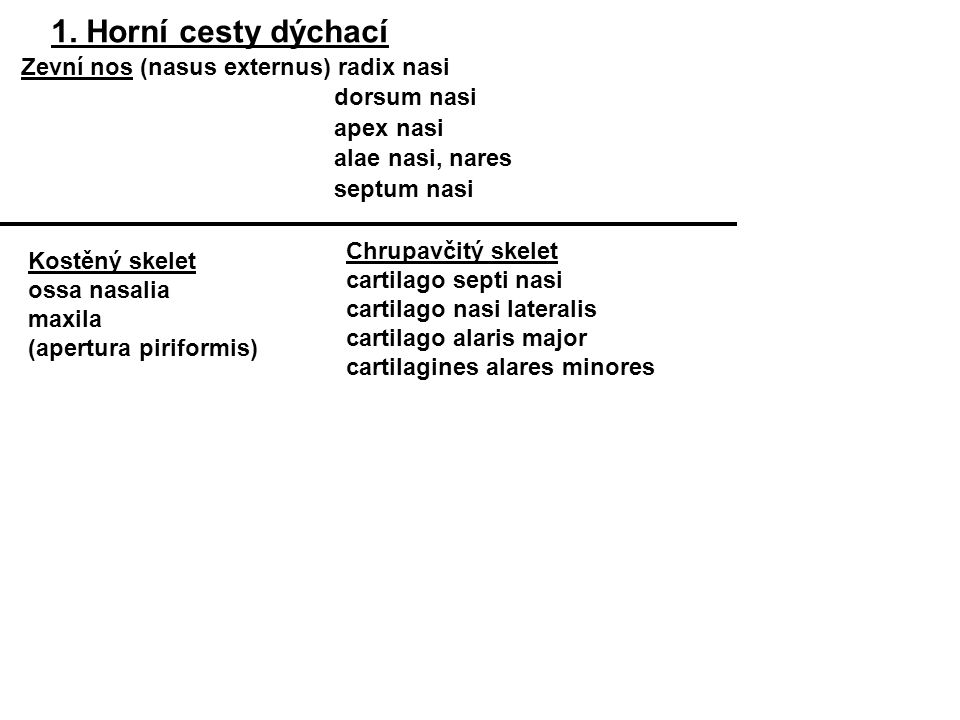 1. Horní cesty dýchací Zevní nos (nasus externus) radix nasi