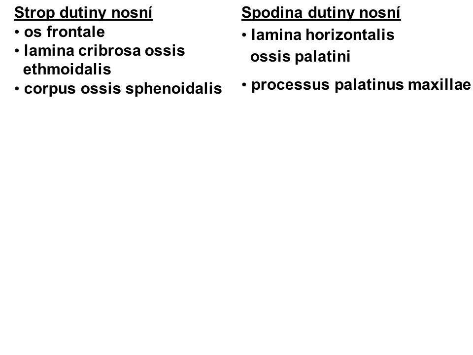Strop dutiny nosní os frontale. lamina cribrosa ossis. ethmoidalis. corpus ossis sphenoidalis. Spodina dutiny nosní.