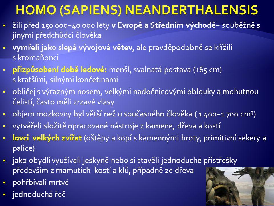 HOMO (SAPIENS) NEANDERTHALENSIS