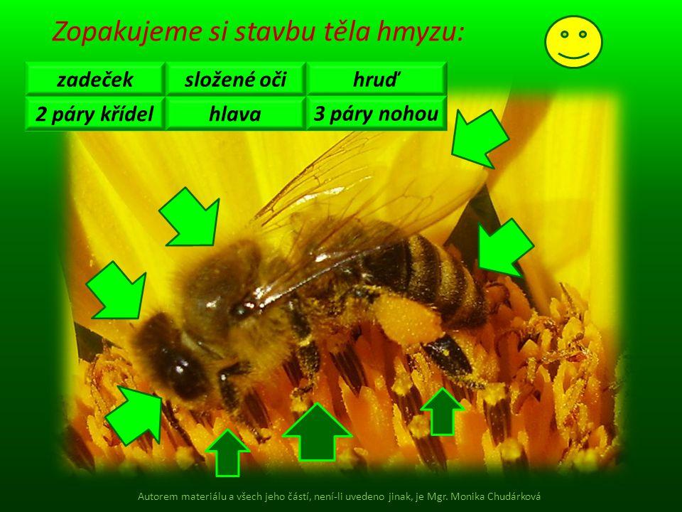 Zopakujeme si stavbu těla hmyzu: