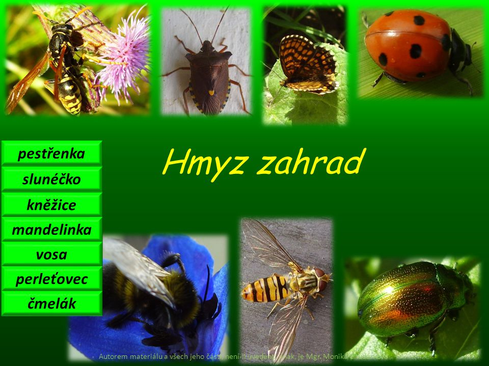 Hmyz zahrad pestřenka slunéčko kněžice mandelinka vosa perleťovec