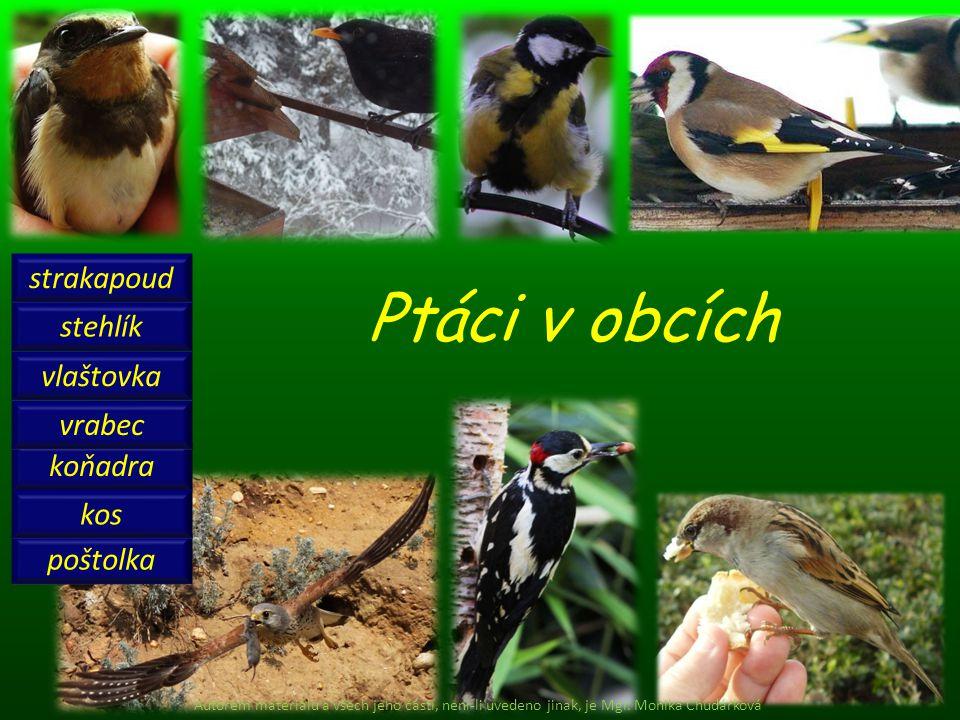 Ptáci v obcích strakapoud stehlík vlaštovka vrabec koňadra kos