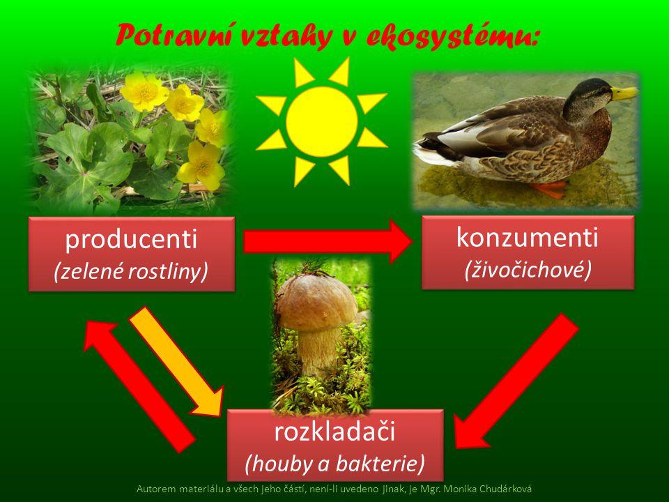 Potravní vztahy v ekosystému: