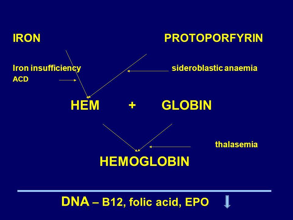 HEM + GLOBIN thalasemia HEMOGLOBIN DNA – B12, folic acid, EPO