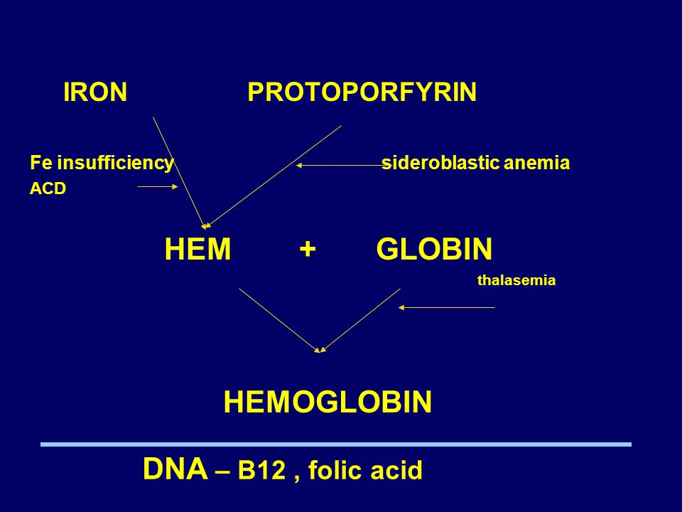 IRON PROTOPORFYRIN HEM + GLOBIN HEMOGLOBIN DNA – B12 , folic acid
