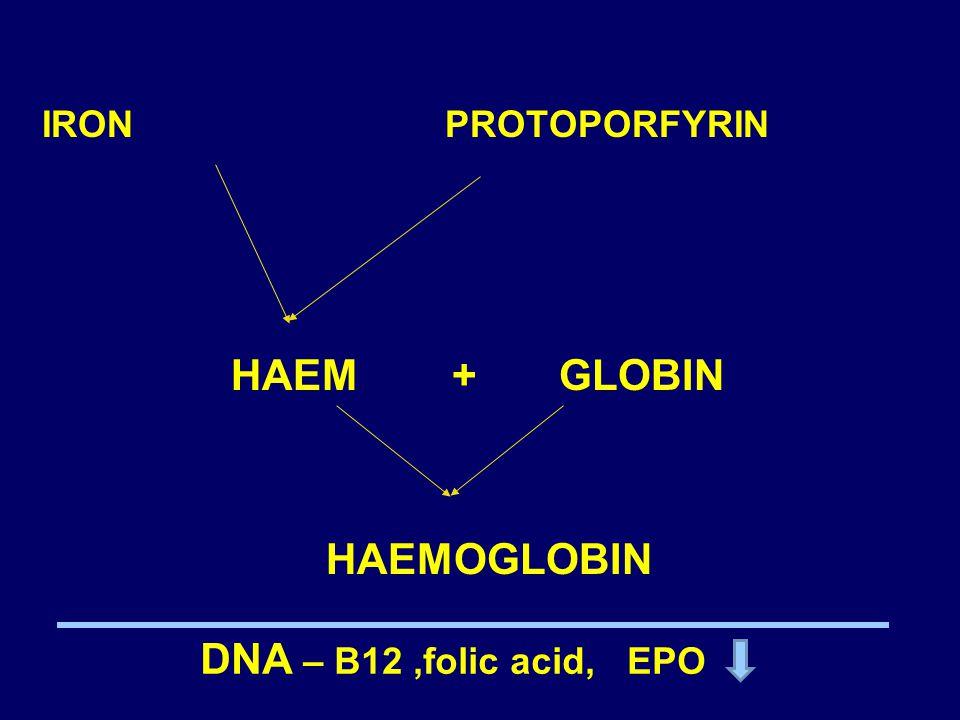 HAEM + GLOBIN HAEMOGLOBIN DNA – B12 ,folic acid, EPO