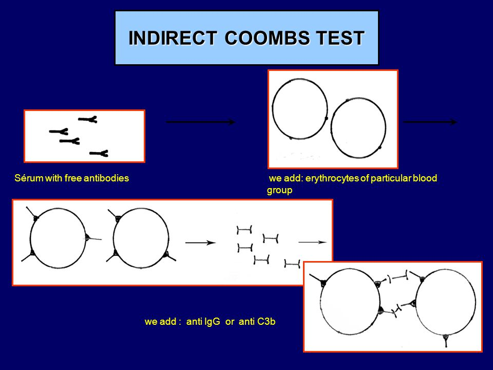 INDIRECT COOMBS TEST Sérum with free antibodies