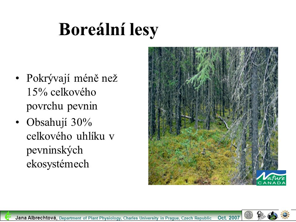 Boreální lesy Pokrývají méně než 15% celkového povrchu pevnin
