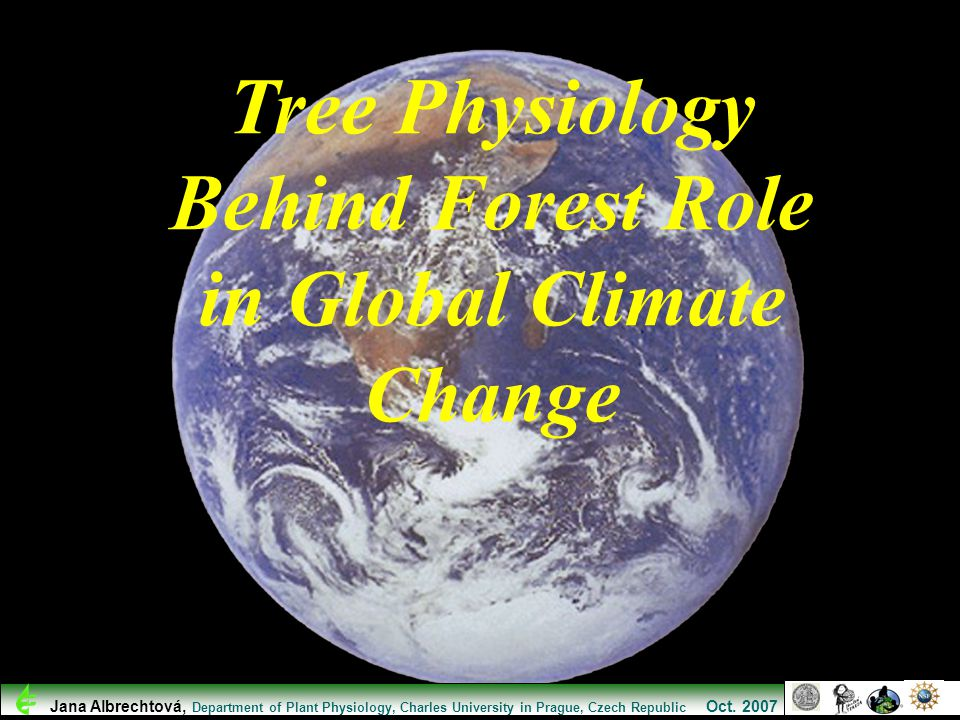Tree Physiology Behind Forest Role in Global Climate Change
