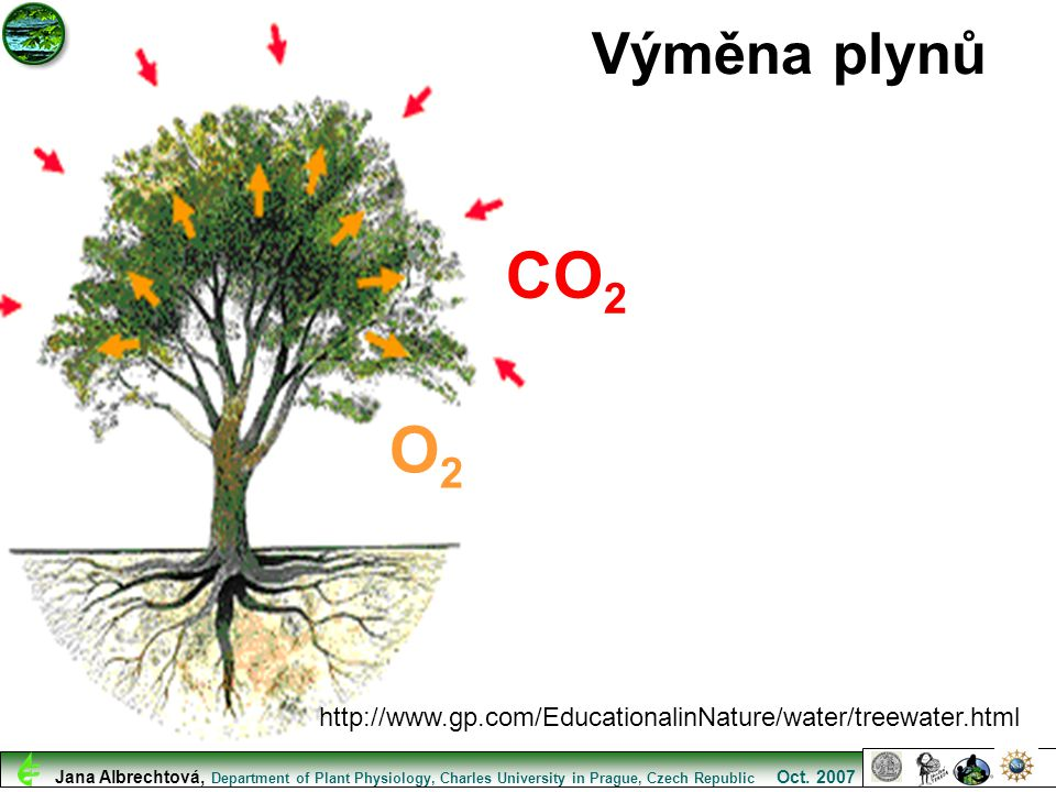 Výměna plynů CO2. O2. http://www.gp.com/EducationalinNature/water/treewater.html.