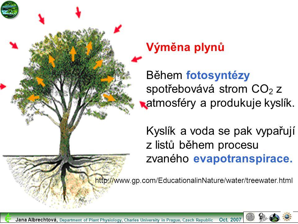 Výměna plynů Během fotosyntézy spotřebovává strom CO2 z atmosféry a produkuje kyslík.