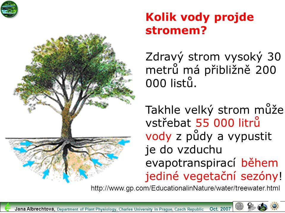 Kolik vody projde stromem