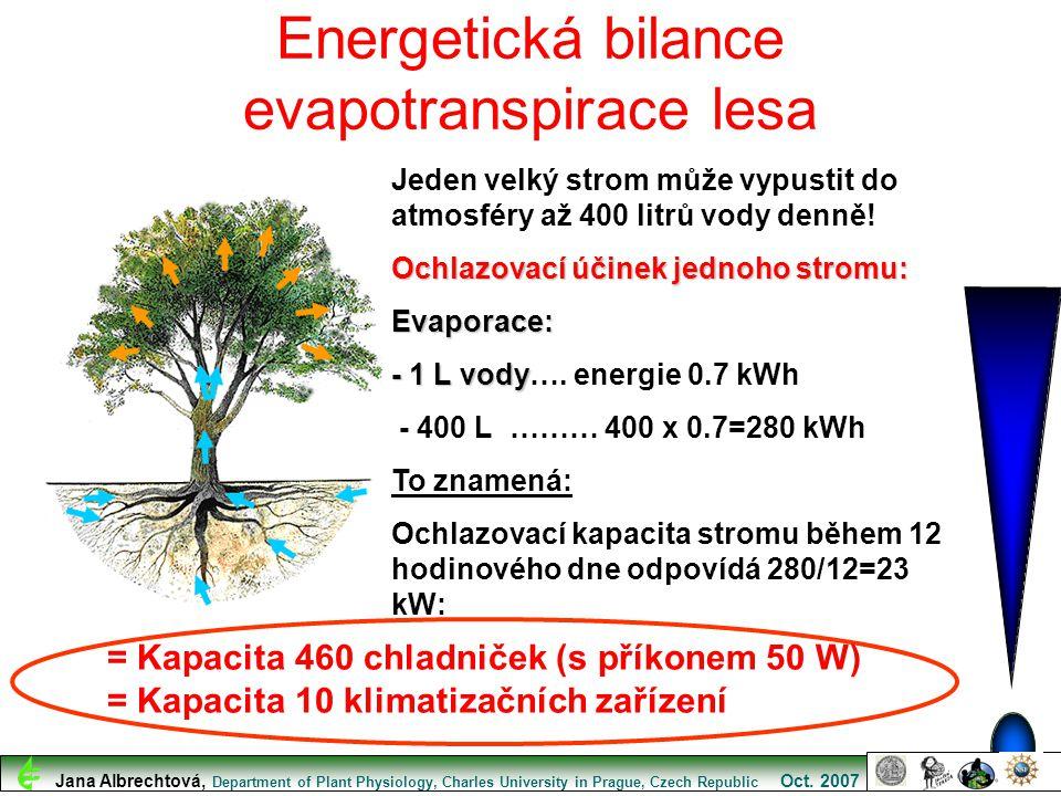 Energetická bilance evapotranspirace lesa