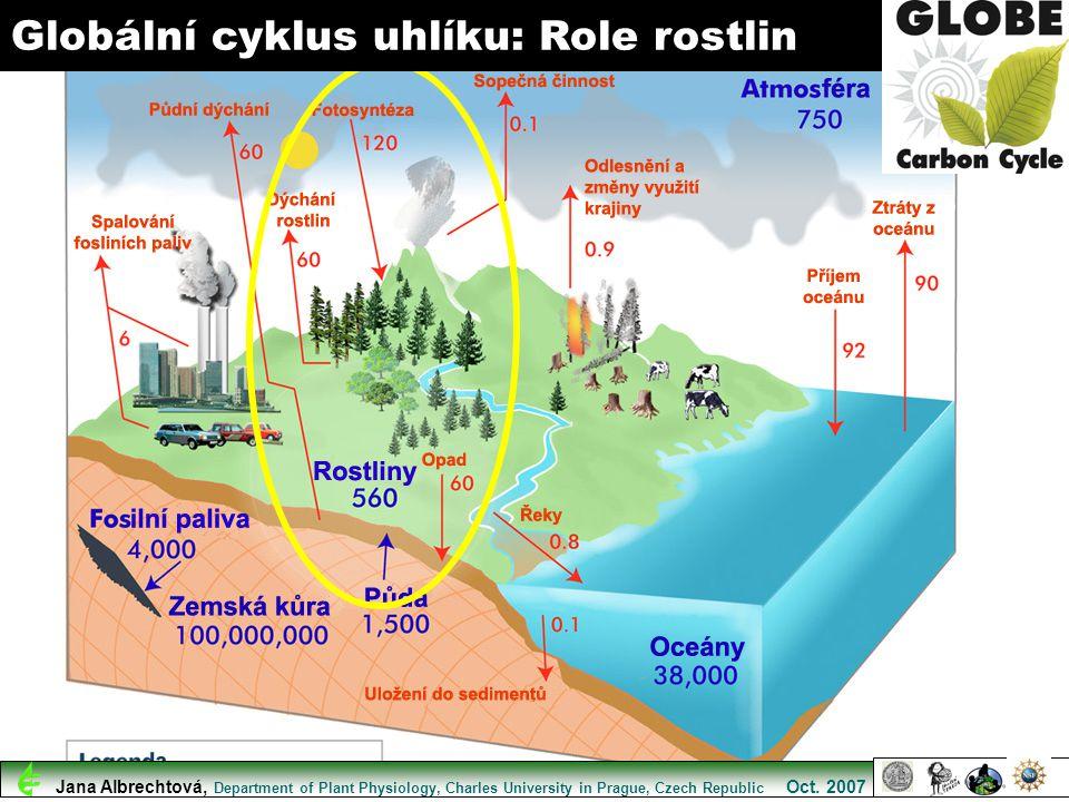 Globální cyklus uhlíku: Role rostlin