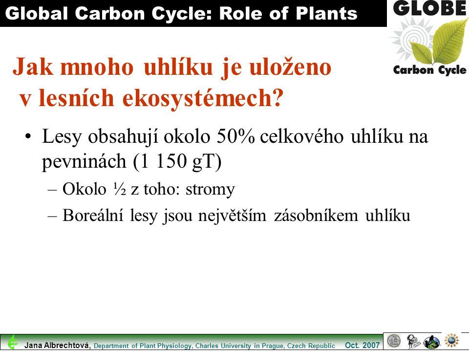 Jak mnoho uhlíku je uloženo v lesních ekosystémech