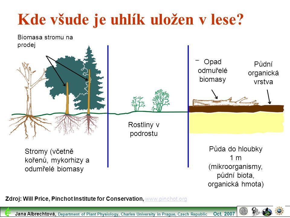 Kde všude je uhlík uložen v lese