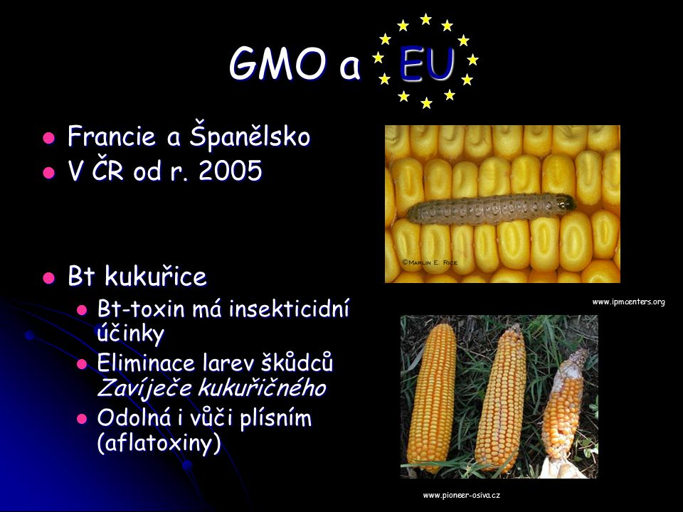 GMO a EU Francie a Španělsko V ČR od r. 2005 Bt kukuřice