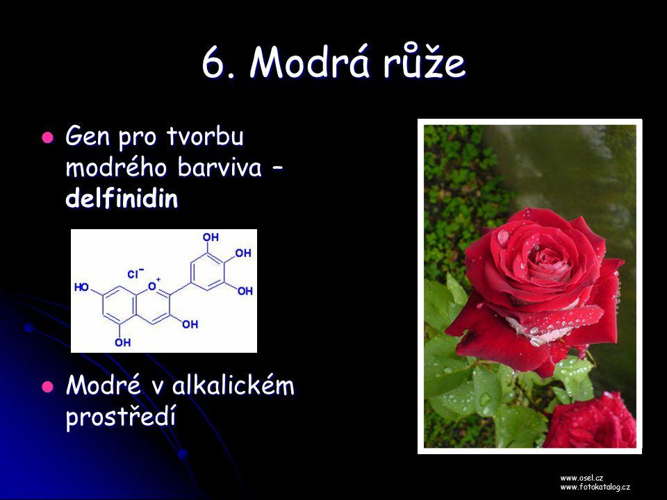 6. Modrá růže Gen pro tvorbu modrého barviva – delfinidin
