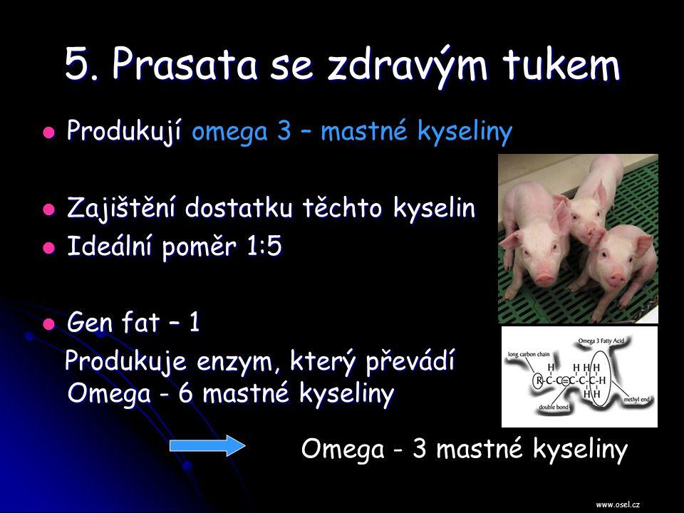 5. Prasata se zdravým tukem