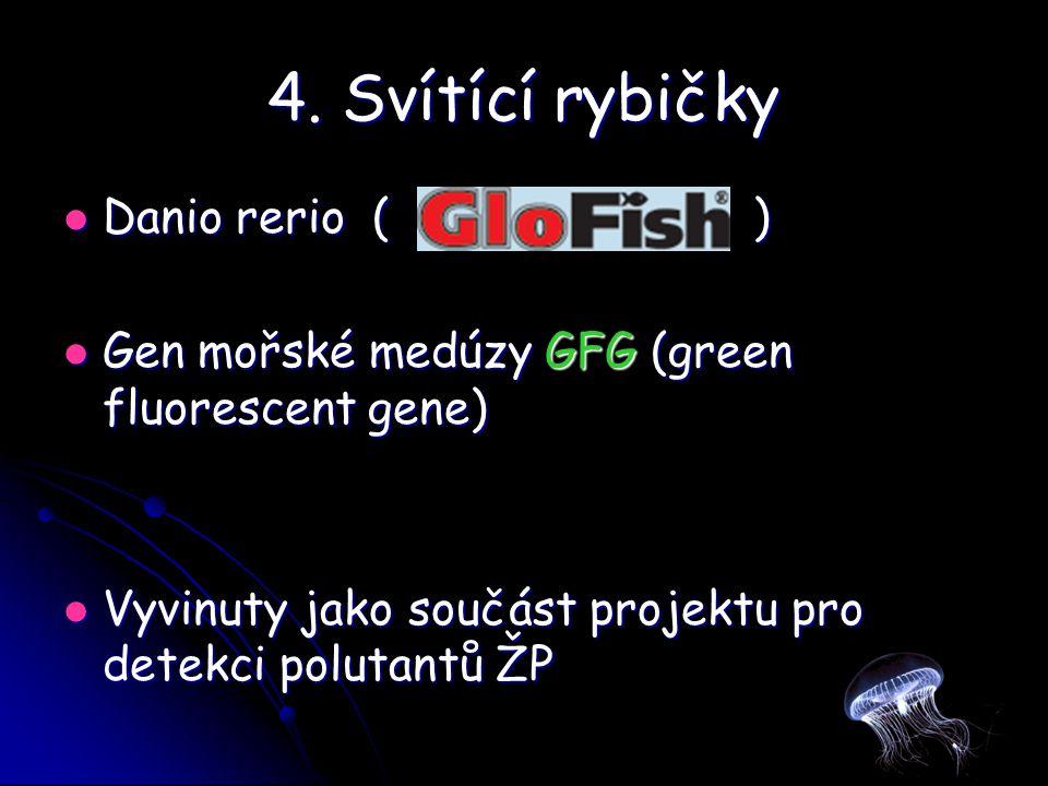 4. Svítící rybičky Danio rerio ( )
