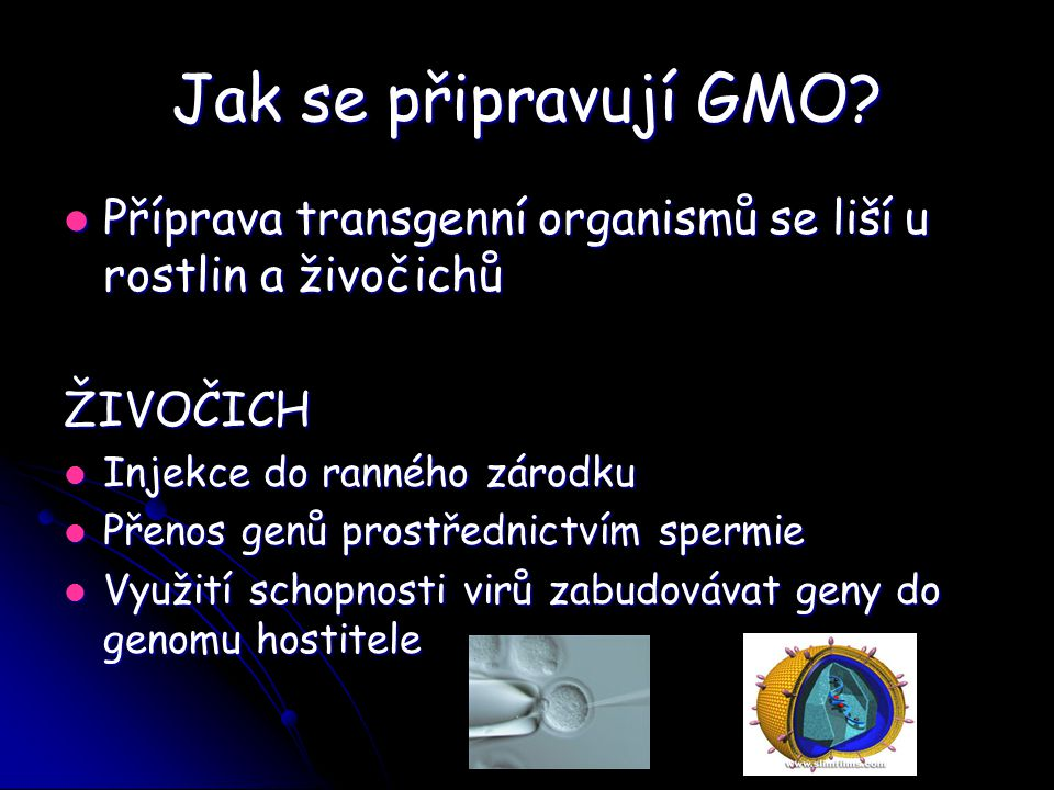 Jak se připravují GMO Příprava transgenní organismů se liší u rostlin a živočichů. ŽIVOČICH. Injekce do ranného zárodku.