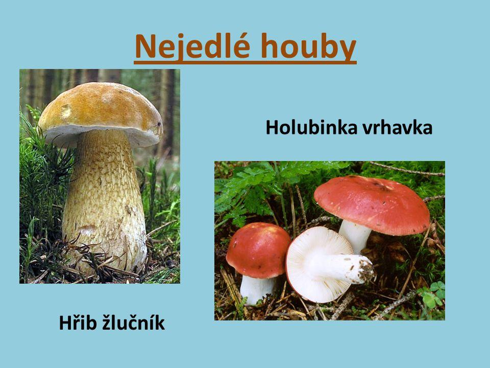 Nejedlé houby Holubinka vrhavka Hřib žlučník