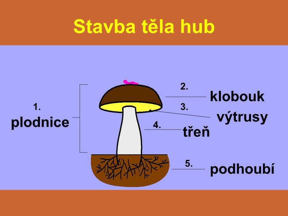 Stavba těla hub 2. klobouk 1. 3. výtrusy plodnice 4. třeň 5. podhoubí