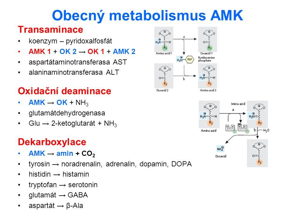 Obecný metabolismus AMK