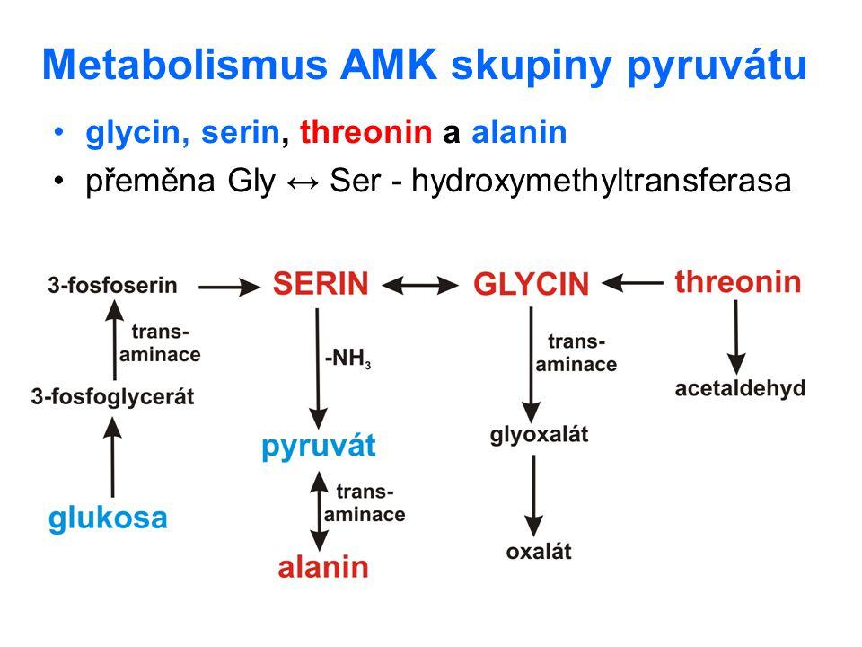 Metabolismus AMK skupiny pyruvátu