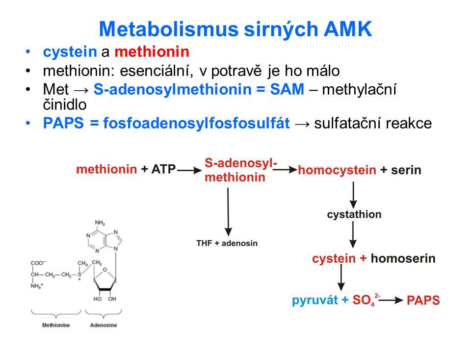 Metabolismus sirných AMK