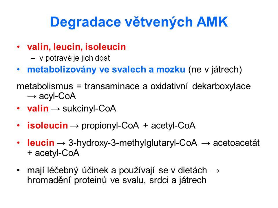 Degradace větvených AMK