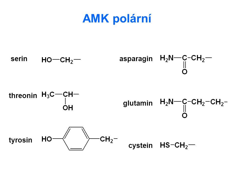 AMK polární serin asparagin threonin glutamin tyrosin cystein