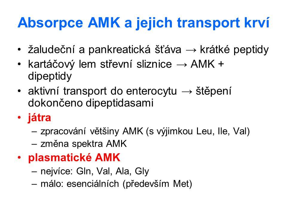 Absorpce AMK a jejich transport krví