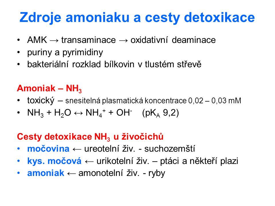 Zdroje amoniaku a cesty detoxikace