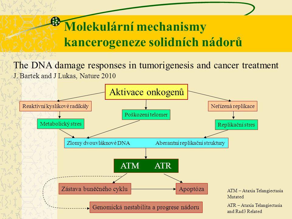 Molekulární mechanismy kancerogeneze solidních nádorů