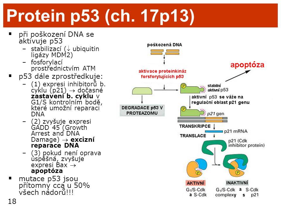 Protein p53 (ch. 17p13) při poškození DNA se aktivuje p53
