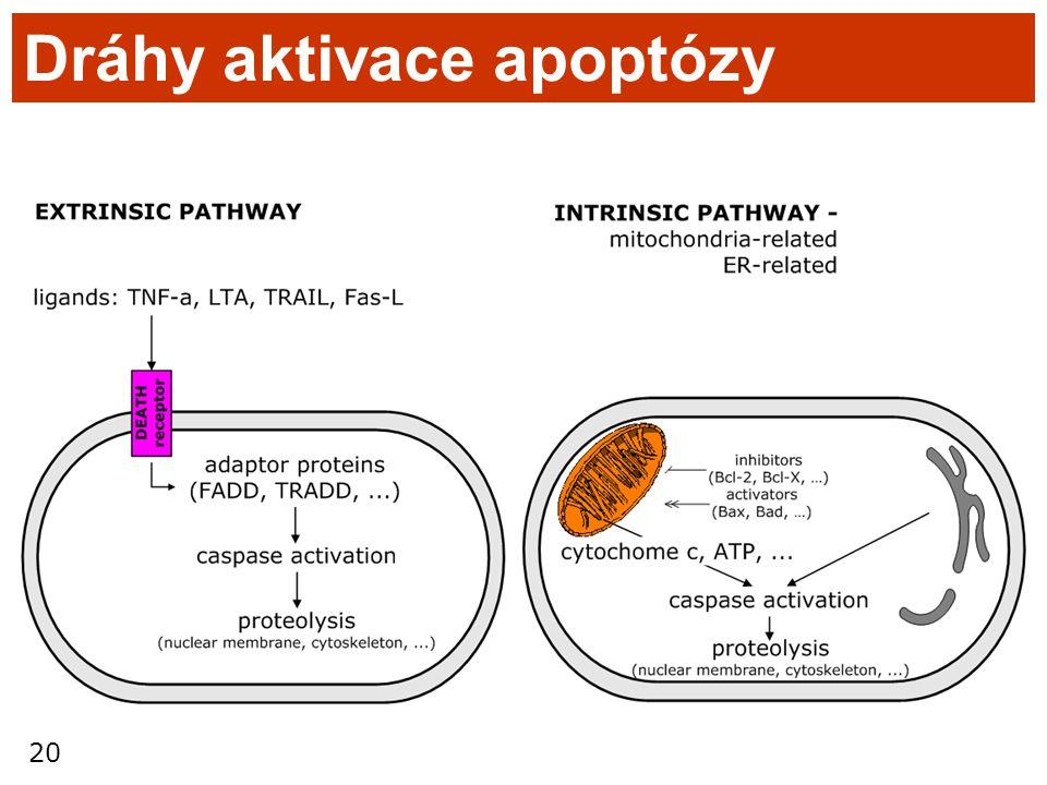 Dráhy aktivace apoptózy